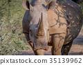 animal, horn, rhinoceros 35139962