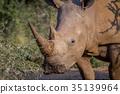 animal, horn, rhinoceros 35139964