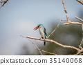 bird, kingfisher, wildlife 35140068