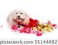 Dog in Chinese New Year festive setting 35144682