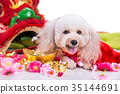 Dog in Chinese New Year festive settings 35144691