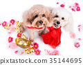 Two dogs in Chinese New Year festive setting  35144695