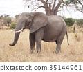 animal, animals, wild 35144961