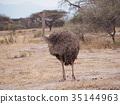 動物 鴕鳥 鳥兒 35144963