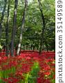 巾着田 花朵 花卉 35149589