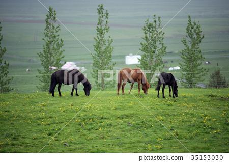 冰島牧馬草原 35153030