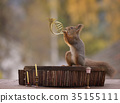 squirrel playing a french horn 35155111