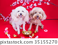 Dog in Chinese New Year festive setting  35155270