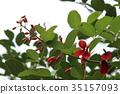 花朵 花卉 花 35157093
