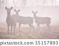 有霧的 霧 薄霧 35157893