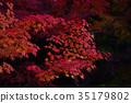 ต้นเมเปิล,ต้นออทัม,ไม้ 35179802