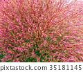 ฤดูใบไม้ร่วง,ต้นเมเปิล 35181145