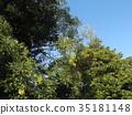 ฤดูใบไม้ร่วง 35181148