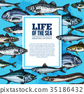 Vector fishes sketch poster sea life ocean fish 35186432