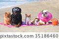 dogs on the beach 35186460
