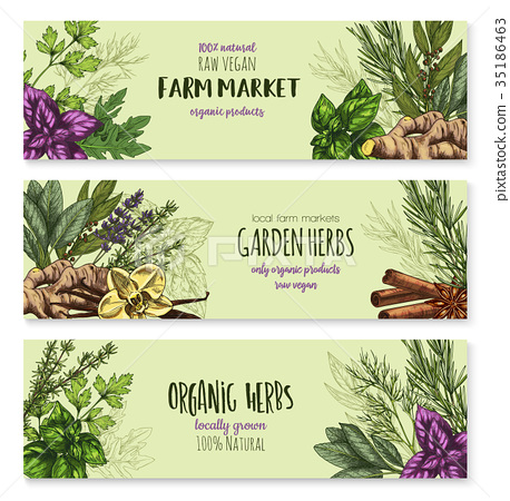 Vector sketch banners of spice and herb seasonings 35186463