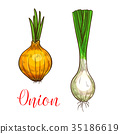 Onion leek vector sketch vegetable icon 35186619