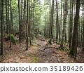 森林 樹林 堆 35189426