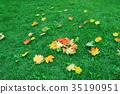 Maple leaf on green grass. Autumn 35190951