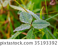 Close up of fresh thick grass with water drops 35193392
