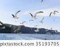 跑與船平行的海貓 35193705