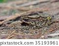 棕色 生物 多樣性 35193961