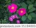 color, rose, pink 35194003