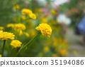 buttercup, buttercups, bloom 35194086