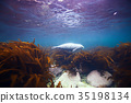 seal underwater photo in wild nature 35198134