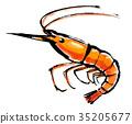 蝦蝦 35205677