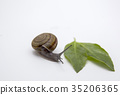 snail walking on white 35206365
