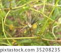 เมล็ดพันธุ์,ฤดูใบไม้ร่วง 35208235