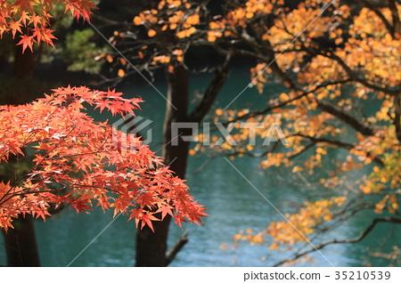 Autumn leaves of Goshikinuma 35210539