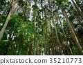 숲, 나무, 어두운 35210773