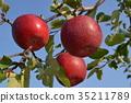 과일, 결실, 사과 35211789