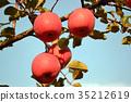 과일, 결실, 사과 35212619