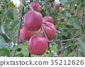 과일, 결실, 사과 35212626