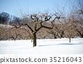 winter, snow scene, snowscape 35216043
