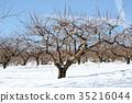 winter, snow scene, snowscape 35216044