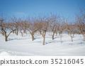 winter, snow scene, snowscape 35216045