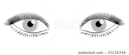 Female Eyes Full Thick Lashes 35216346