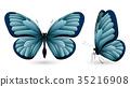 蝴蝶 一組 立體 35216908