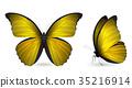 蝴蝶 一組 立體 35216914
