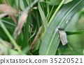 蟲子 漏洞 昆蟲 35220521