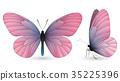 蝴蝶 一組 立體 35225396