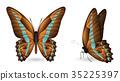 蝴蝶 一組 立體 35225397