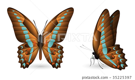 Set of colorful butterflies. Front and side view 35225397