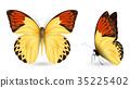 蝴蝶 一組 立體 35225402