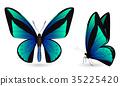 butterfly, set, 3d 35225420