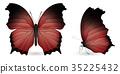 蝴蝶 一組 立體 35225432